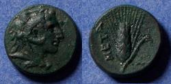 Ancient Coins - Lucania, Metaponton 300-250 BC, AE14