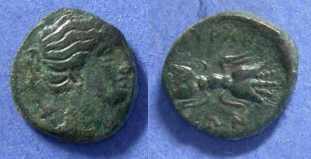 Ancient Coins - Syracuse, Sicily 289-287 or 278, AE14