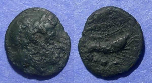Ancient Coins - Priapus, Mysia Circa 50 BC, AE18