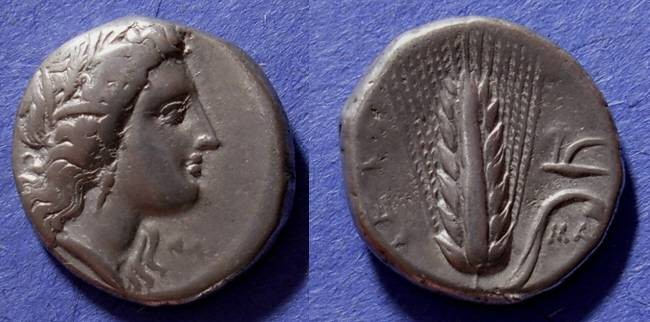 Ancient Coins - Metapontion, Lucania 325-300 BC, Stater