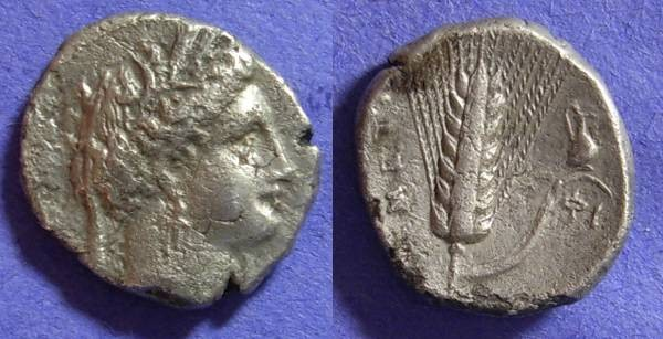 Ancient Coins - Metapontion Lucania Nomos Circa 330-300 bc