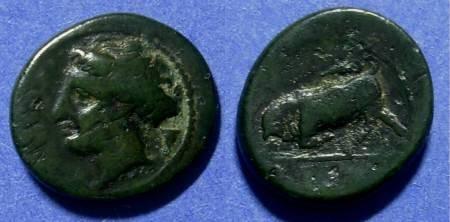 Ancient Coins - Syracuse Sicily Hieron II 275-215 AE16
