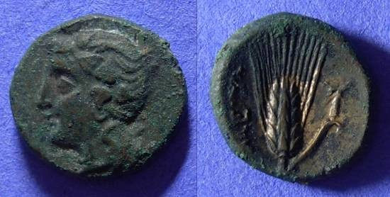 Ancient Coins - Metapontion Lucania AE15 350-250 BC
