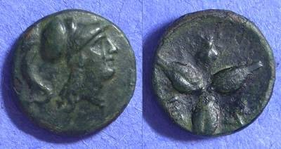 Ancient Coins - Metapontion Lucania – AE13 – 300-250BC
