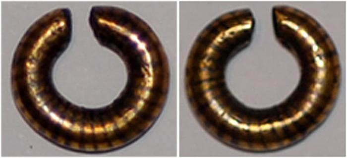 celtic britain gold ring money