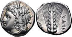 Ancient Coins - LUCANIA, Metapontion. Circa 330-290 BC. AR Nomos (18mm, 7.86 g, 7h)