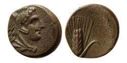 Ancient Coins - LUCANIA, Metapontion. Circa 300-250 BC. Æ.