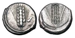 Ancient Coins - LUCANIA, Metapontion.  470-440 BC.  AR Thick Stater