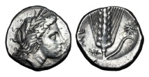 Ancient Coins - LUCANIA, Metapontion.  330-300 BC.  AR Nomos …