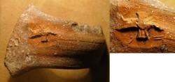 Ancient Coins - A Ceramic Jar Handle (LM)LK ZP