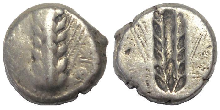 Ancient Coins - Lucania: Metapontum, ca. 510-480 BC.  AR Incuse Stater