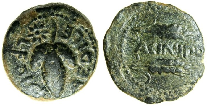 Ancient Coins - SPAIN.ACINIPO ( Ronda la Vieja, Malaga).1st cent.BC.AE.As.~~~Bunch of grapes.~#~Two corn ears.