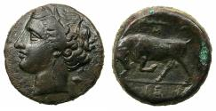 Ancient Coins - SICILY.SYRACUSE.Hieron II 275-215 BC.AE.20mm. Reverse.Butting bull.