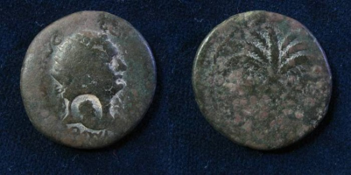 Ancient Coins - Judea Capta issues, mint of Caesarea Bronze, Caesarea. 92/3 AD. .(with countermark)
