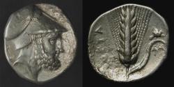 Ancient Coins - Lucania, Metapontion.  340-330 BC. AR Stater. HN Italy 1576.  Leukippos / Barley Ear