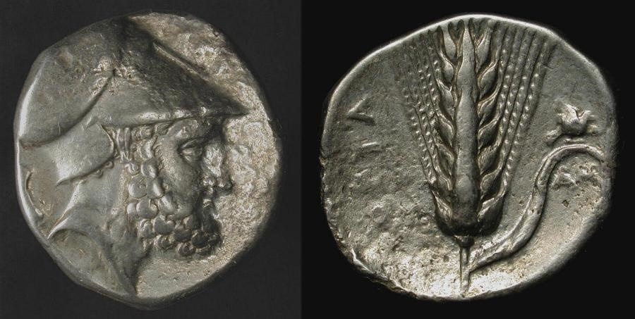 Ancient Coins - Lucania, Metapontion.  340-330 BC. AR Stater. HN Italy 1576.  Leukippos / Barley Ear