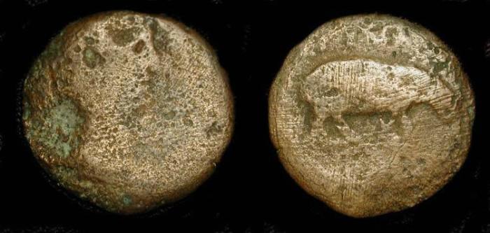 Ancient Coins - Claudius 41-54 AD . Alexandria, AE 24. Hippopatamus