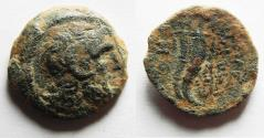 Ancient Coins - PTOLEMAIC KINGS of EGYPT. Ptolemy IX Soter II. 115-104/1 BC. Æ 20. Kyrene mint.