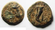 Ancient Coins - PTOLEMAIC KINGS of EGYPT. Ptolemy IX Soter II. 115-104/1 BC. Æ 18mm. Kyrene mint.