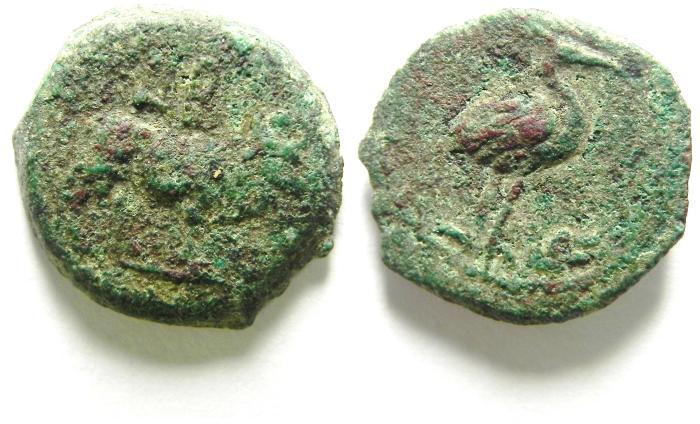 Ancient Coins -   EGYPT , ALEXANDRIA , AE DICHALKON - CALIGULA?? , HERON STD. RIGHT AND IBIS BULL , VERY RARE !!! AS FOUND