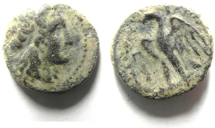 Ancient Coins - PTOLEMAIC KINGDOM , PTOLEMY I AE 18 , ALEXANDRIA