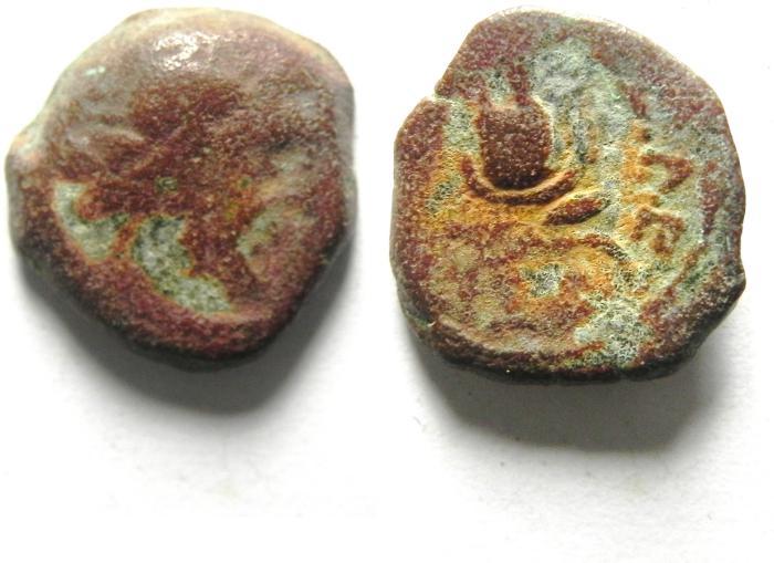 Ancient Coins - Ptolemaic Kingdom. Ptolemy IX Soter II (Lathyros). 116-106 B.C. Æ 13 mm. Cyrene