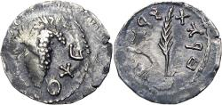 Ancient Coins - JUDAEA. Bar Kochba Revolt. Undated (134/135 AD).