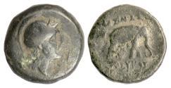 Ancient Coins - SELEUKID, Seleukos II. AE denom C, Ecbatana, 246-226 BC. Athena / Elephant. Rare