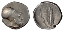 Ancient Coins - LUCANIA, Metapontion. AR Nomos, circa 340-330 BC. Leukippos / Barley ear
