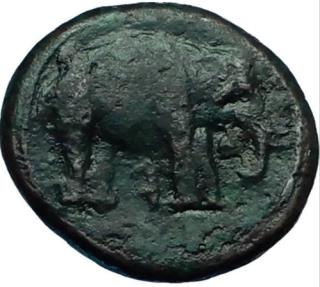 Ancient Coins - ETRURIA Arretium 208 BC Hannibal Time Punic War ELEPHANT  Greek