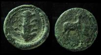 KYRENAICA, KYRENE. 308-277 BC. HORSE & SILPHIUM, EX-RARE!!!