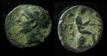 Ancient Coins - Antiochos I AE 13mm Denomination D. Antioch mint.  Rare!