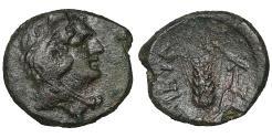 Ancient Coins - Lucania. Metapontion. 300-250 BC. Bronze. Rare. Brown patina. aXF
