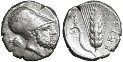 Ancient Coins - LUCANIA. Metapontion. Nomos 340-330 BC VF+. \ Greek coin