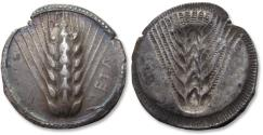 Ancient Coins - Lucania, Metapontum. 28mm AR nomos - iconic coin with barley - circa 510-470 B.C. -