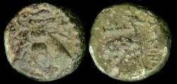 Ancient Coins - IONIA, Ephesos (280-258 BC) Ae16