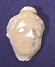 Ancient Coins - Ghandaran Stucco Head - 500 BC - AD 300