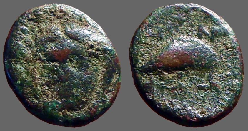 Ancient Coins - Aeolis, Grynion, AE10  Apollo / Mussel shell