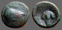 Ancient Coins - Arpi, Apulia. AE14  Athena / Grape Cluster