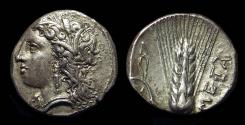 Ancient Coins - LUCANIA, Metapontion. AR Stater (7.83g), c. 330-290 BC.
