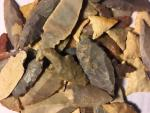Ancient Coins - Lot of 75 Neolithic Saharan Stone Points
