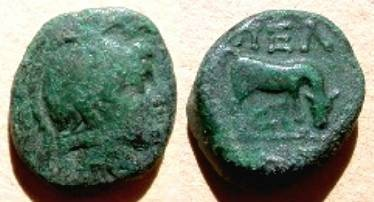 Ancient Coins - Macedonia, Pella Æ 18mm. Circa 187-31 BC. Helmeted head of Athena Parthenos right /  Ox grazing right;