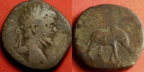 Ancient Coins - SEPTIMIUS SEVERUS AE sestertius. Rome, 196 AD. MVNIFICENTIA AVG, Elephant walking. Rare.