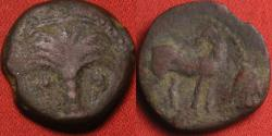 Ancient Coins - CARTHAGE, Siculo-Punic, AE 16mm. ~300 BC. Palm tree with hanging dates. Horse standing, palm behind.