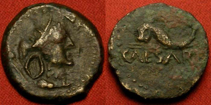 Ancient Coins - TIME OF AUGUSTUS. Colony of Caesarea in Mauretania. Africa wearing elephant skin headdress. CAESAREA below dolphin. Rare.