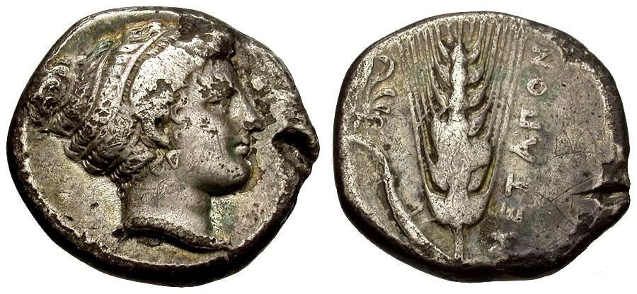 Ancient Coins - Lucania.  Metapontum AR Stater / Barley ear