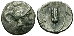 Ancient Coins - Lucania. Metapontion. Time of Pyrrhos. The Lucani AR Drachm