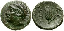 Ancient Coins - Lucania. Metapontion Æ12 / Apollo Carneius