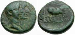 Ancient Coins - Tiberius with Drusus Caesar. Macedon. Philippi Æ16 / Priests Ploughing