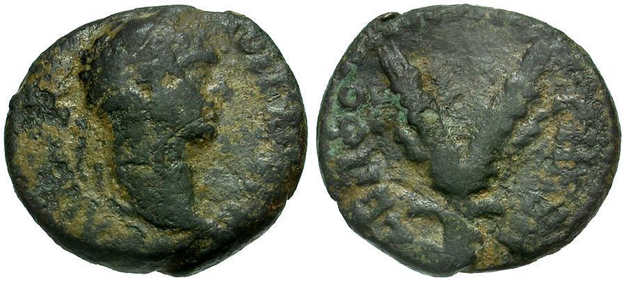 Ancient Coins - Trajan. Judaea Sepphoris. Diocaesarea Galilee Æ14